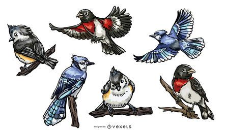 Realistic birds illustration pack