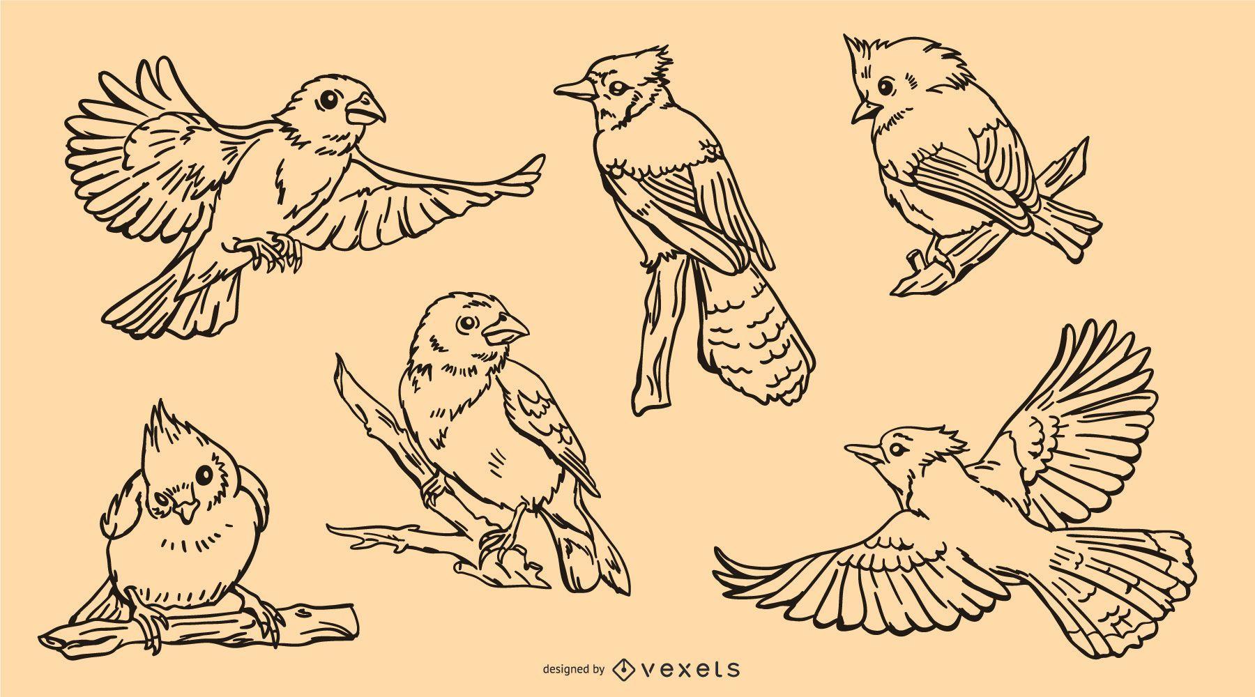 Paquete de trazos de pájaros realistas