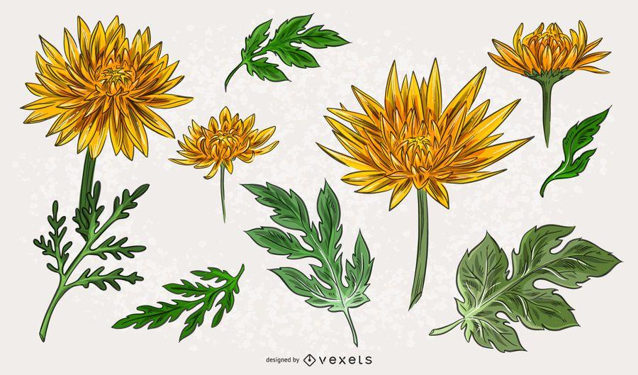 Yellow Chrysanthemum Illustration Pack