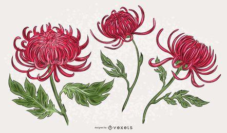 Conjunto de ilustração de crisântemo rosa