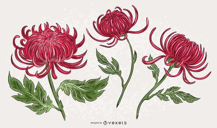 Pink Chrysanthemum Illustration Set