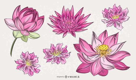 Chinese Pink Flower Illustration Set