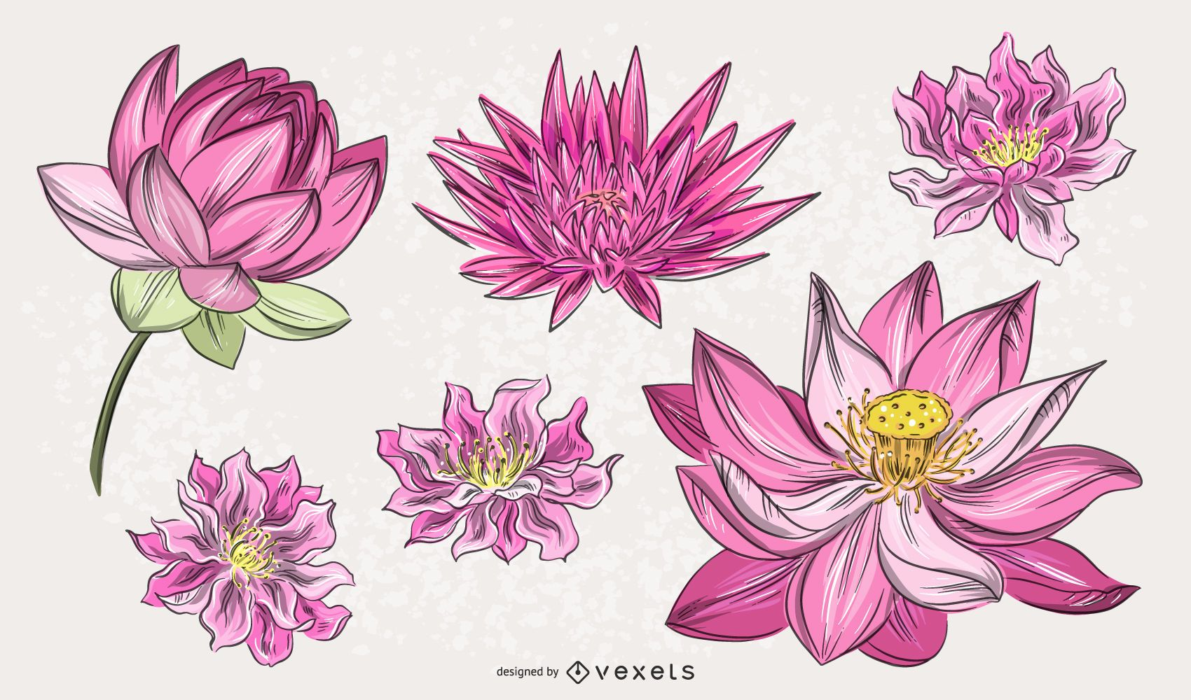 Chinese Pink Flower Illustration Set