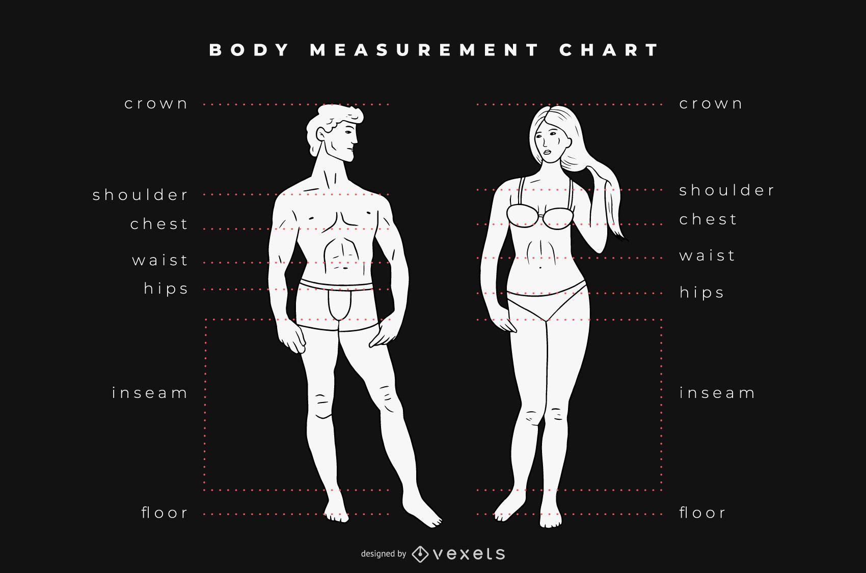 Gr?fico de tabla de medidas corporales