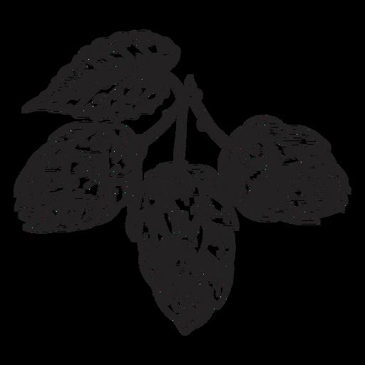 Ilustração de hop de cone Transparent PNG