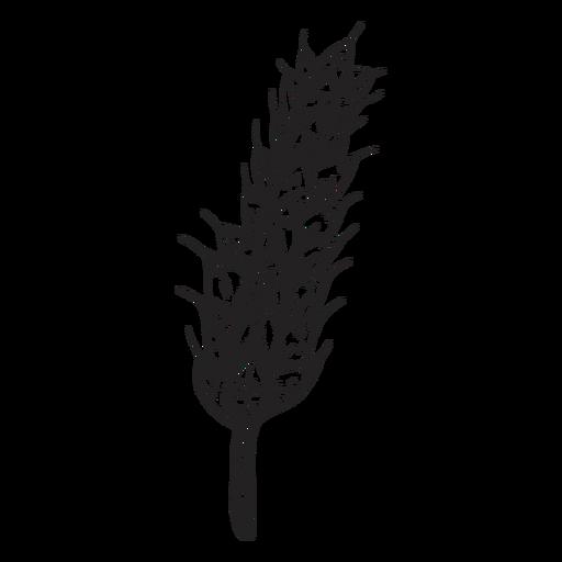 Ilustración de maíz de oreja de trigo Transparent PNG