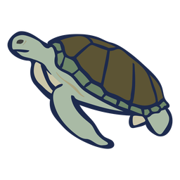 Animal colorido tartaruga plana