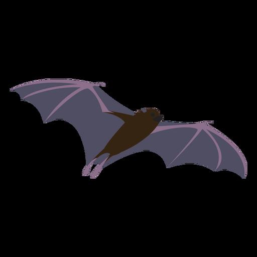 Flat bat fly