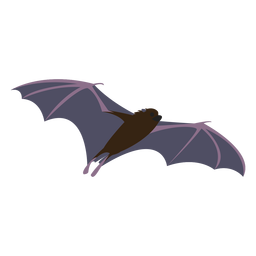 Flat bat fly night