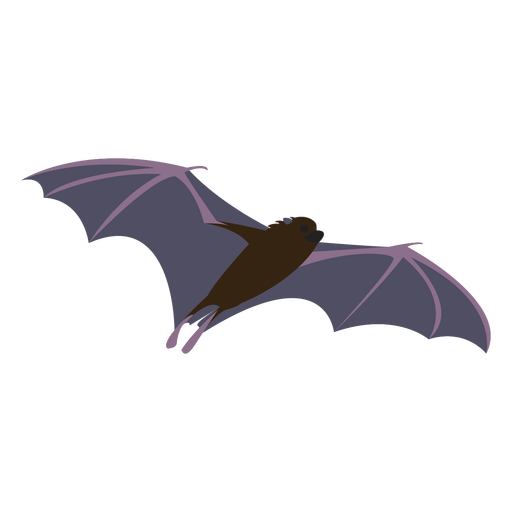Flat bat fly night