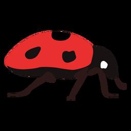 Flaches Marienkäfer-Insekt