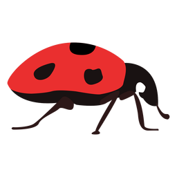 Insecto mariquita plana