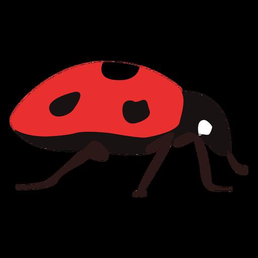 Flat ladybug insect