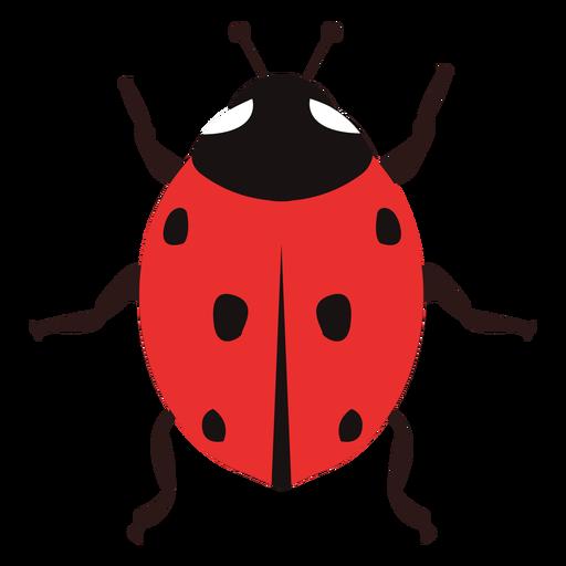 Ladybug image flat