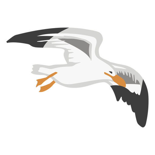 Seagull color animal Transparent PNG