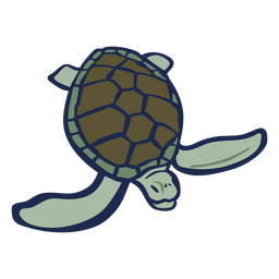 Turtle color animal flat