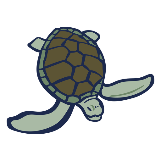 Turtle color animal flat Transparent PNG