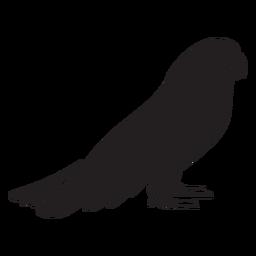 Silhueta de perfil bonito papagaio em pé