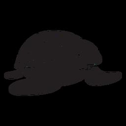 Vista frontal sorridente de tartarugas marinhas