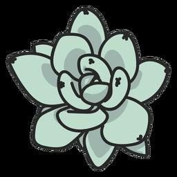 Ilustração de planta suculenta verde