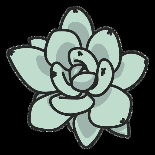 Ilustración de planta suculenta verde