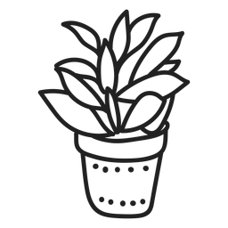 Planta suculenta Kalanchoe