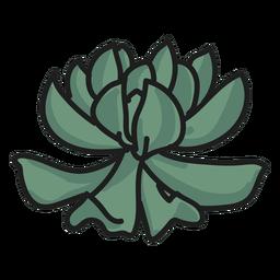 Planta doodle ilustração suculenta