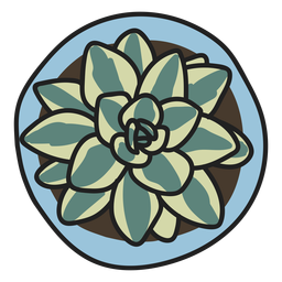 Ilustración de planta suculenta