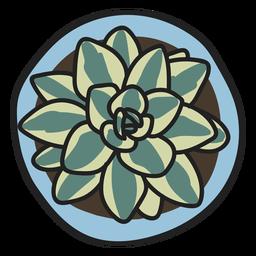 Planta suculenta ilustración