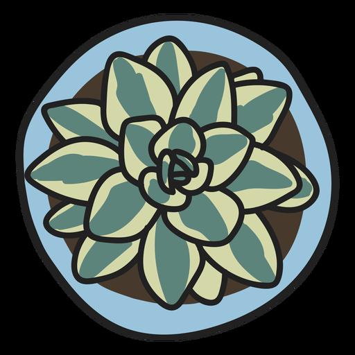 Ilustración de planta suculenta Transparent PNG