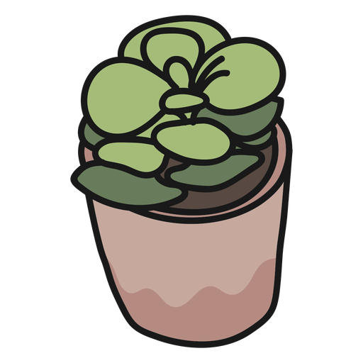 Plant succulent stroke illustration Transparent PNG