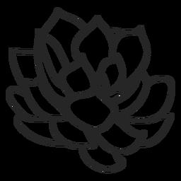 Plantas suculentas ilustración incolora.