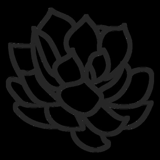 Plantas suculentas ilustración incolora. Transparent PNG