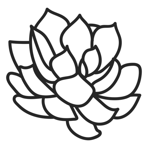 Plants succulents colorless illustration Transparent PNG