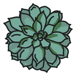 Stroke succulent plant illustration