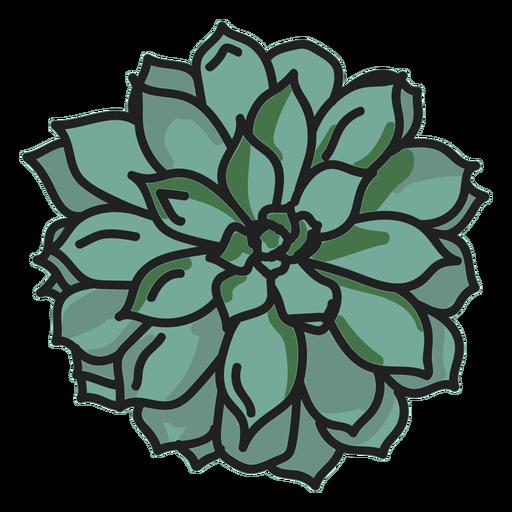 Ilustración de planta suculenta de trazo