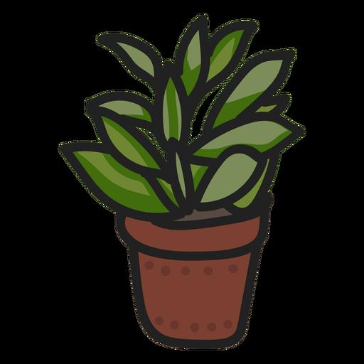 Succulent plant stroke illustration Transparent PNG