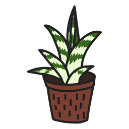 Succulent attractive gasteria illustration