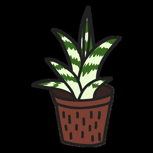 Succulent attractive gasteria illustration Transparent PNG
