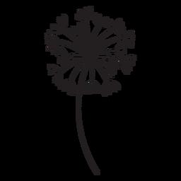 Löwenzahn Pflanze Schlaganfall