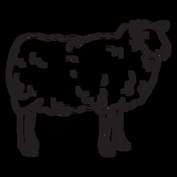 Schaf-Schlaganfall