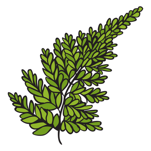 Silver fern hand drawn Transparent PNG