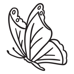 Vista lateral de traçado de borboleta