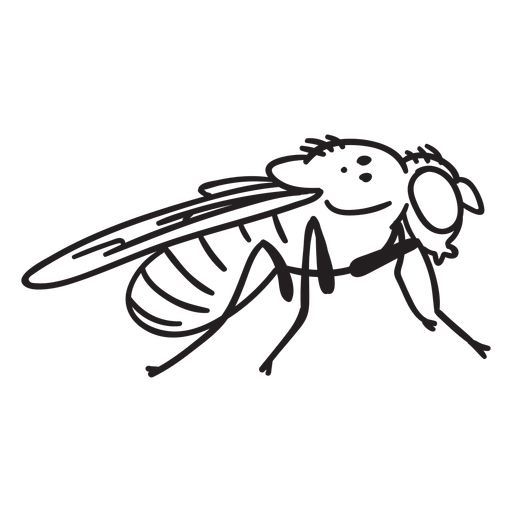 Fly drawing simple