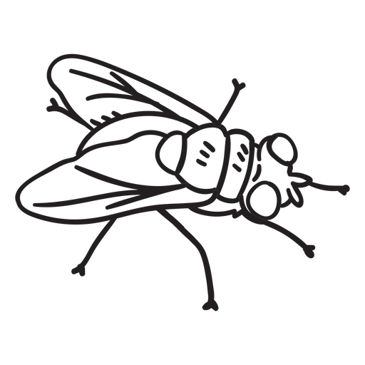 Fly topview drawing