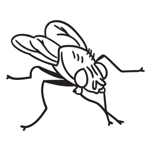 Simple fly drawing