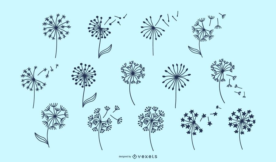Dandelion flowers collection