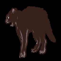 Gato preto assustado