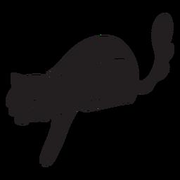 Lindo gato jugando