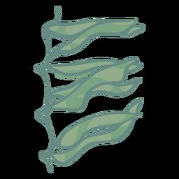 Hand drawn seaweed